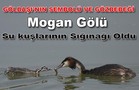 Su kuşlarının sığınağı: Mogan