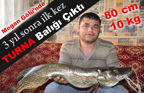 Oltayla 80 cmuzunluğunda Turna Balığı yakalandı
