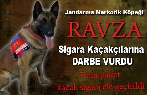 Jandarmadan Narkotik Köpekli Sigara Kaçakçılığı Operasyonu