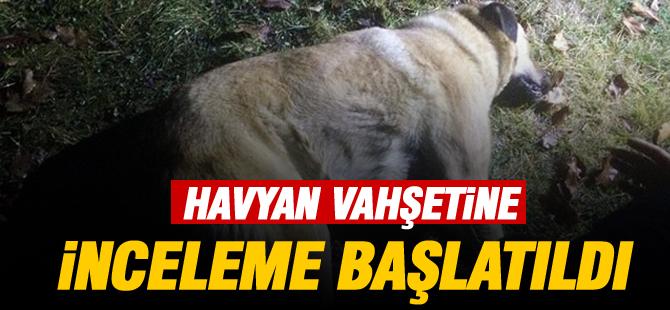 Gölbaşı'nda yaşanan hayvan katliamı için inceleme başlatıldı