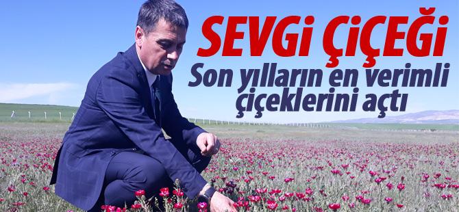 Türkiye'nin ilk tescilli bitkisi çiçeklerini açtı