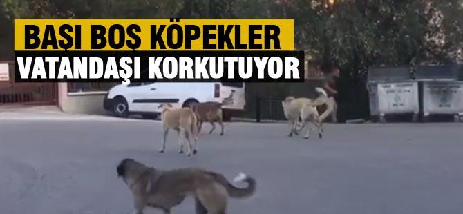 Sokak Köpekleri vatandaşı korkutuyor