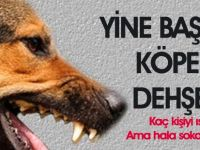 Gölbaşı'nda başıboş sokak köpekleri dehşeti yaşatıyor