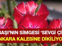 Ankara Kalesi'nde 'Sevgi Çiçeği'